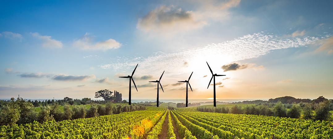 Negócio do Mês_ Um agosto de aquisições na eólica e nos vinhos
