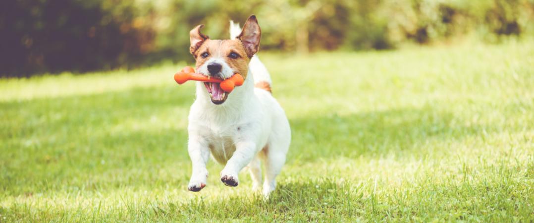 Investimento em start-ups ligadas a animais de estimação cresceu 334%