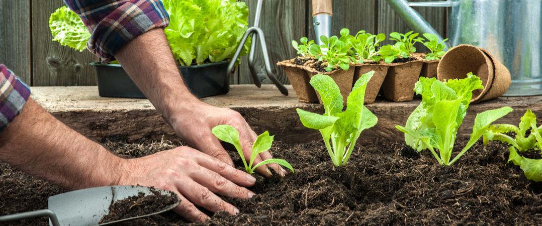 Start-up do mês: Open Grow