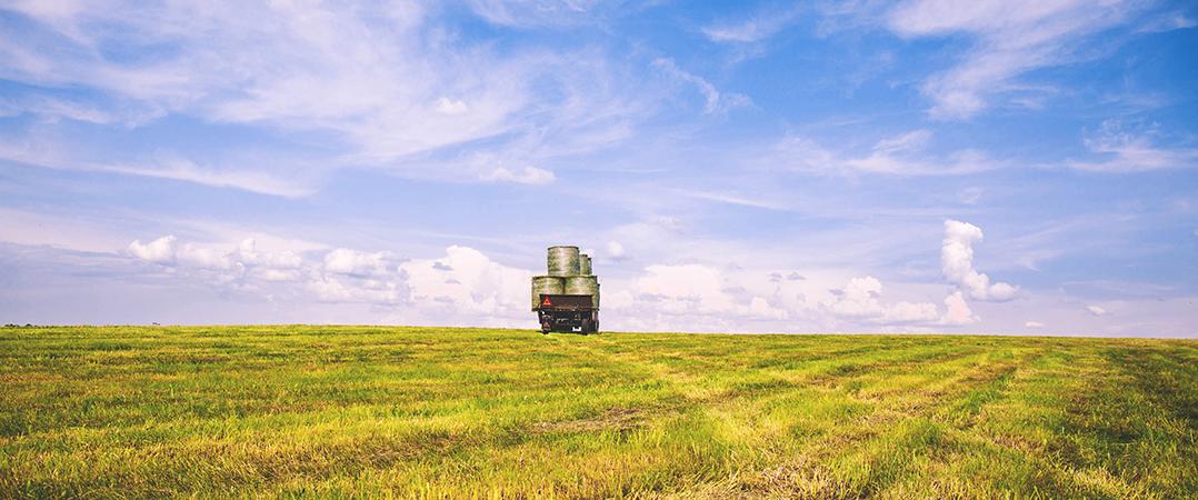 Um futuro sem carne: os negócios que vão alimentar o mundo