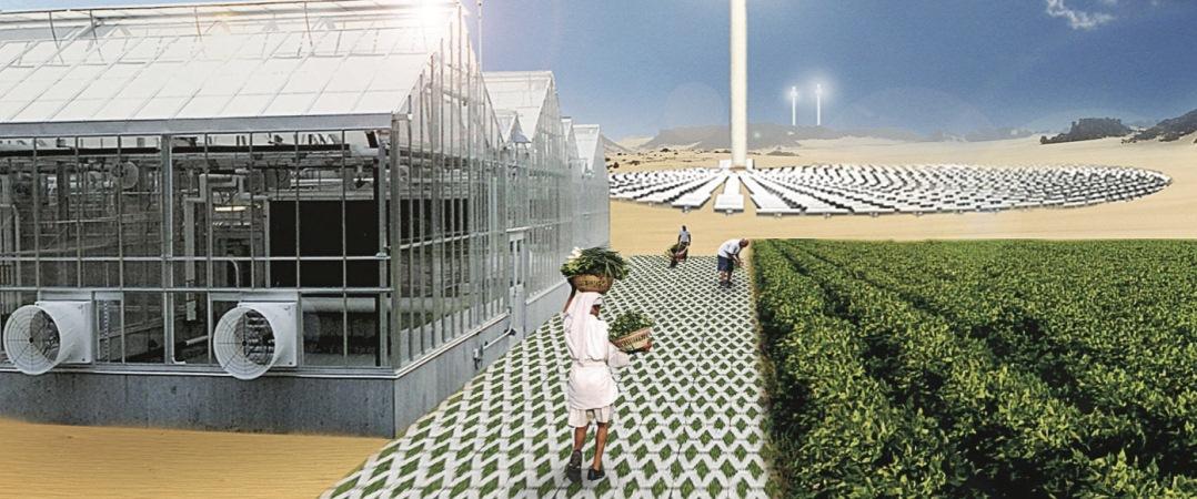 As start-ups holandesas que querem garantir um futuro sustentável