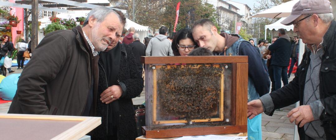 BeeSOStainable – Amigos da Montanha